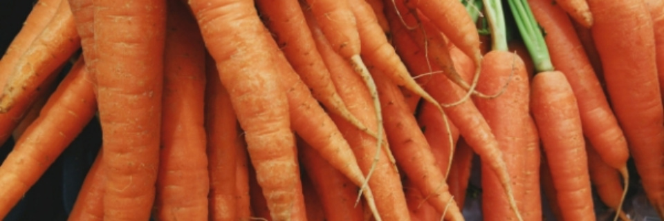 Carrots Big Pic