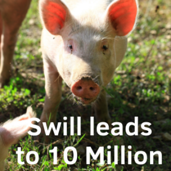 Swill Leads To 10 Million