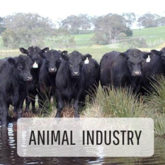 Tfga Animal Industry