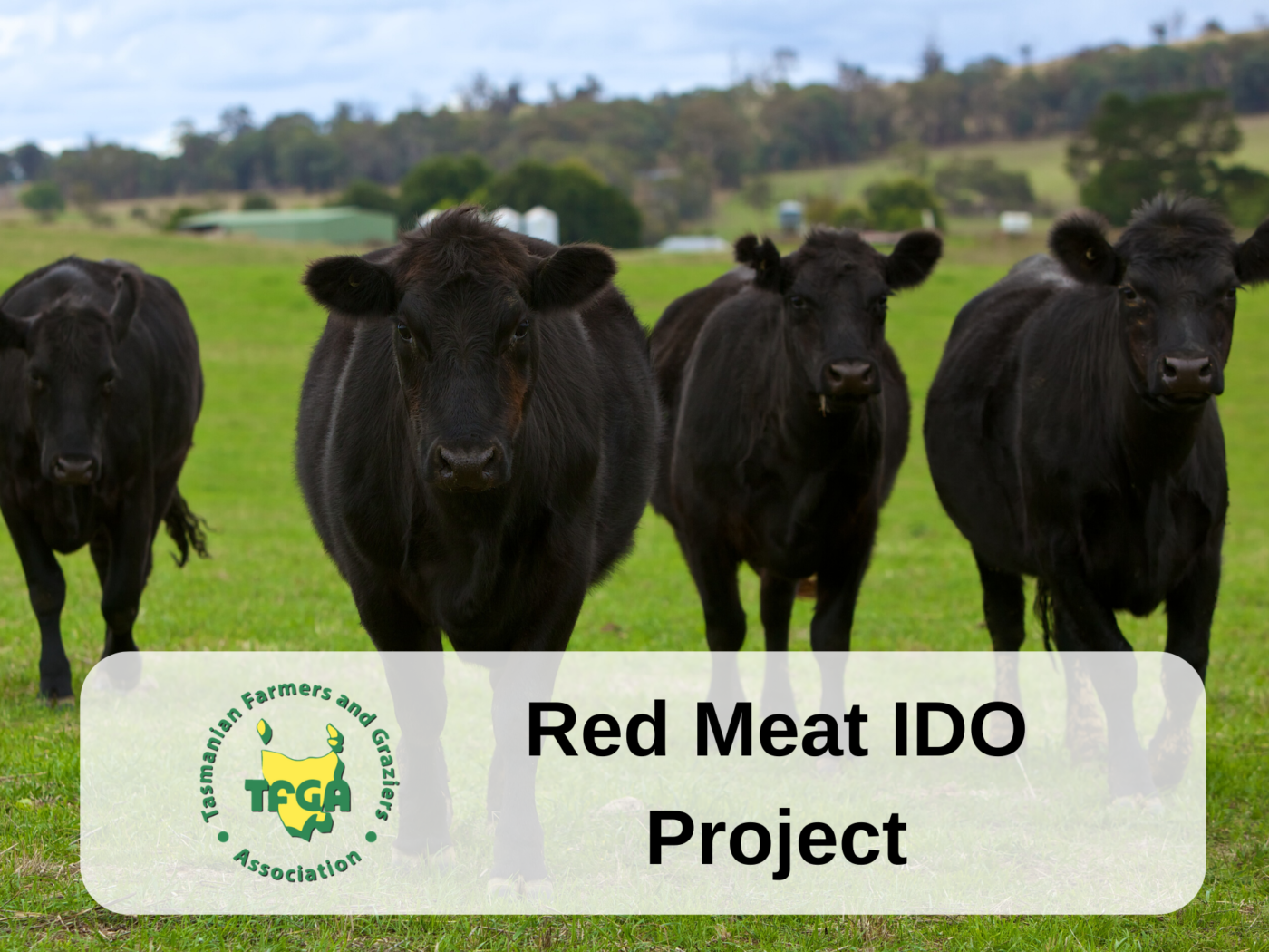 Red Meat IDO Project