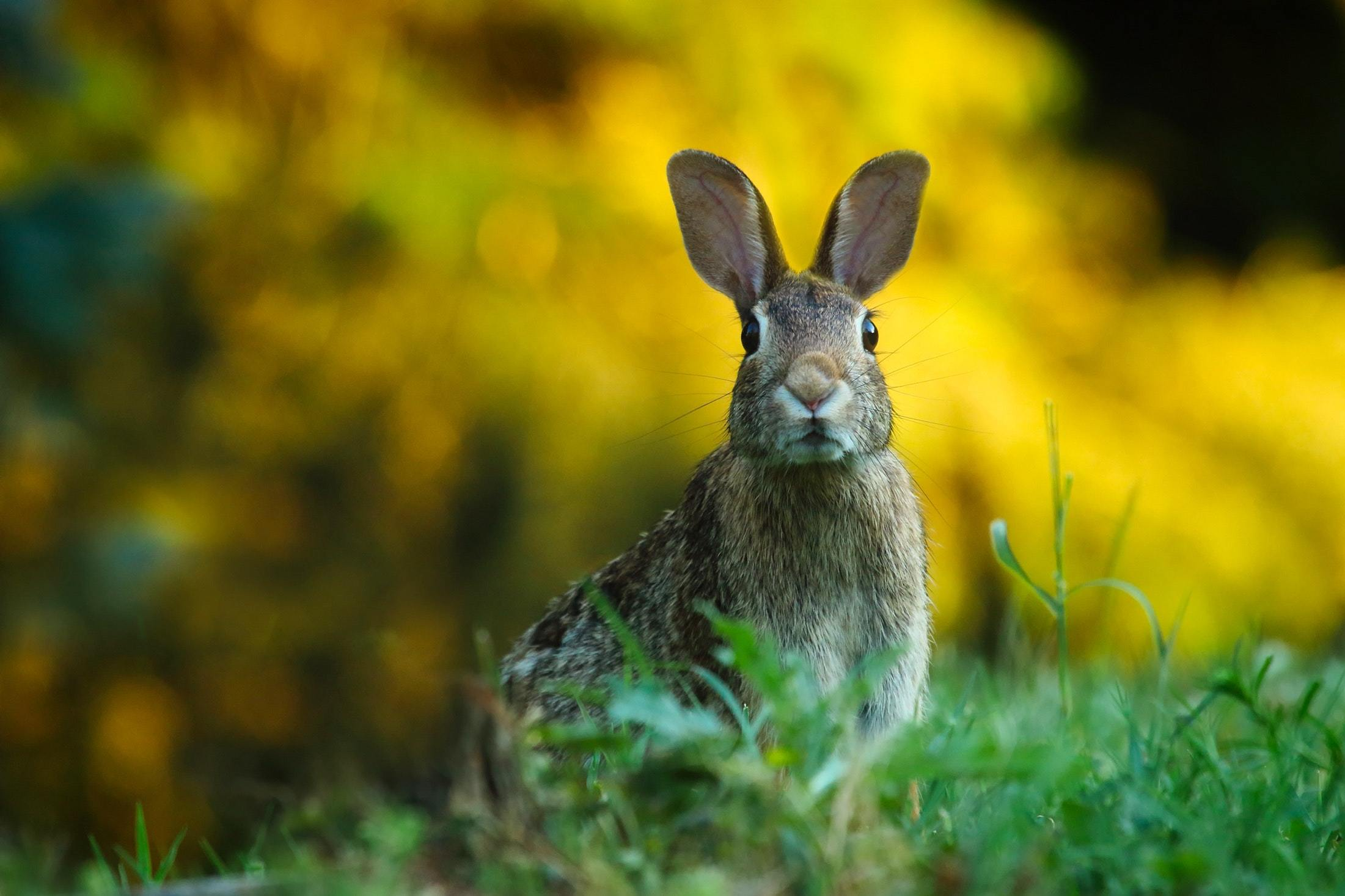 Close up of rabbit on field 247373