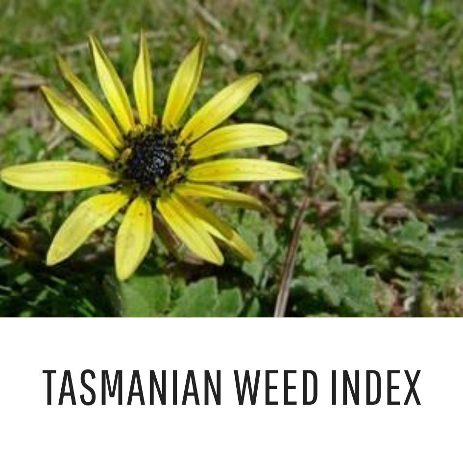T As Weed Index